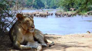 3 Days: Samburu National Reserve Adventures