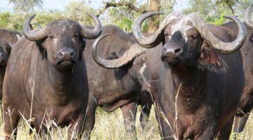 14 Days: Masai Mara | Naivasha Nakuru | Aberdare | Mt Kenya & Samburu