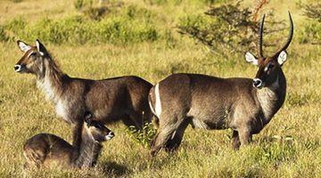 8 Days: Masai Mara | Nakuru | Amboseli | Tsavo West & Tsavo East